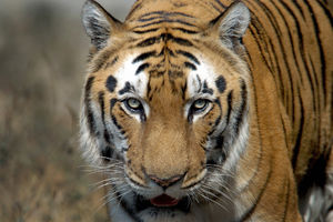 Animal activists want India to