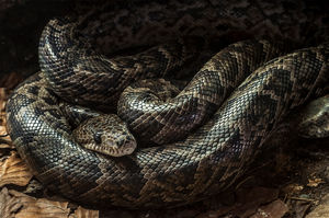 Toddler found in home with boa