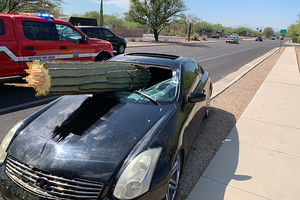 Driver unharmed after cactus