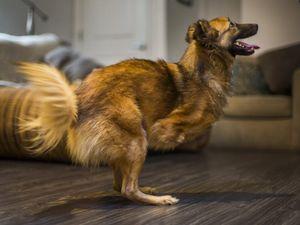Fundraiser for dog's