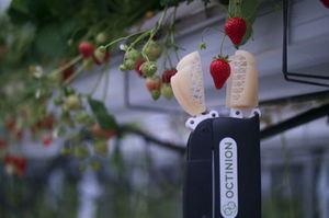 Octinion's strawberry-picking