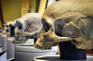Clues to Our Unknown Ancestors