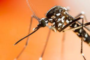 'Mosquito-pocalypse is
