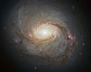 The Most Massive Galaxies Spin