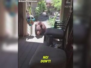 WATCH: Woman orders bear to