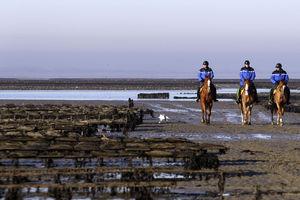 Spy oysters and kayak patrols: