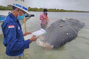 Dead whale had stomach stuffed