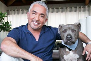 Cesar Millan weighs in on