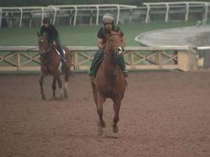 20th horse in 2 months dies at