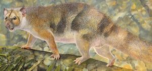 Miniature lion fossils lead to