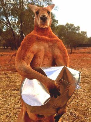 Australian favourite, Roger