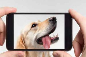 20 free must-have apps for dog