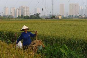 Vietnam's Economic Growth Will