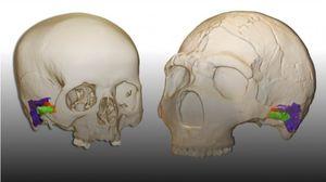 Neanderthals Had the Capacity