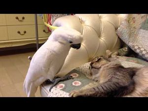 Parrot Wants to Stroke the