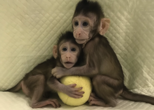 Monkeys have been successfully