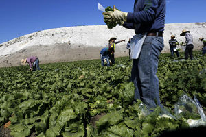 Farmworker union underpaid its