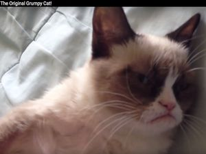 Viral Web Sensation 'Grumpy