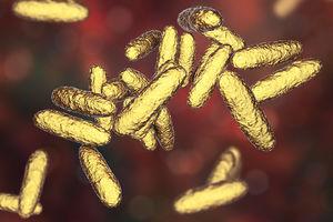 'Flesh-Eating' STD that causes