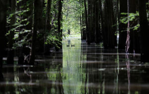 Louisiana Pipeline Protesters