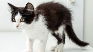 Animal testing: US closes